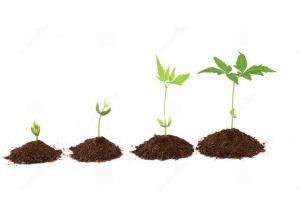 plant-stages-plant-evolution-white-34235659