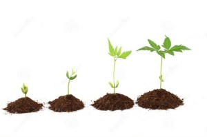 plant-stages-plant-evolution-white-34235659 - Copy